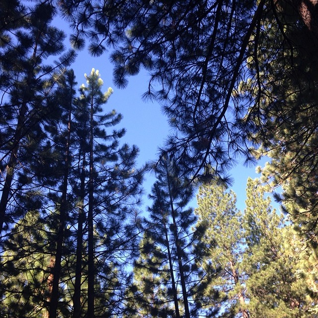 Morning in Tahoe. The smell of pine is one of the things I love most.,